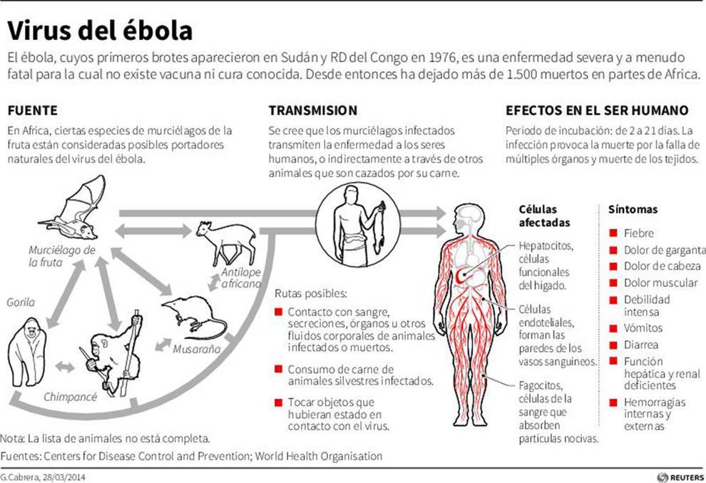 _ebolabroteafricagraveoms260614_04c9a7a9