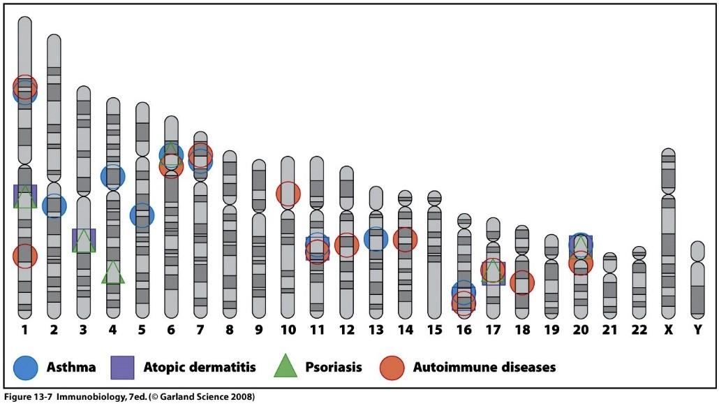 factores genéticos