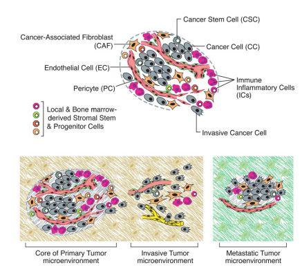 tumor micror